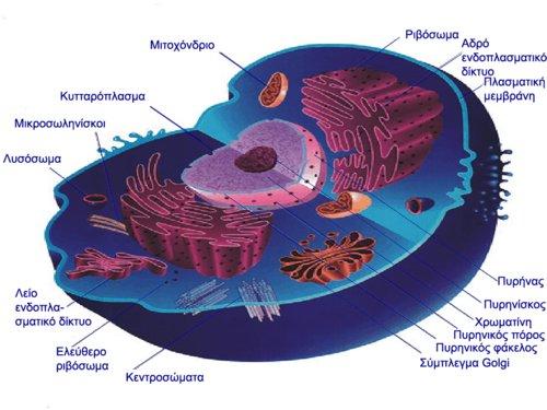 cellula.bmp